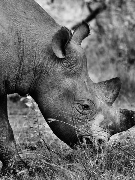 RichardTerborg_RwandaAnimals15.jpg