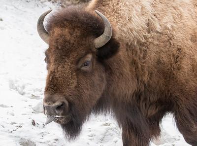 Yellowstone - Feb 2016