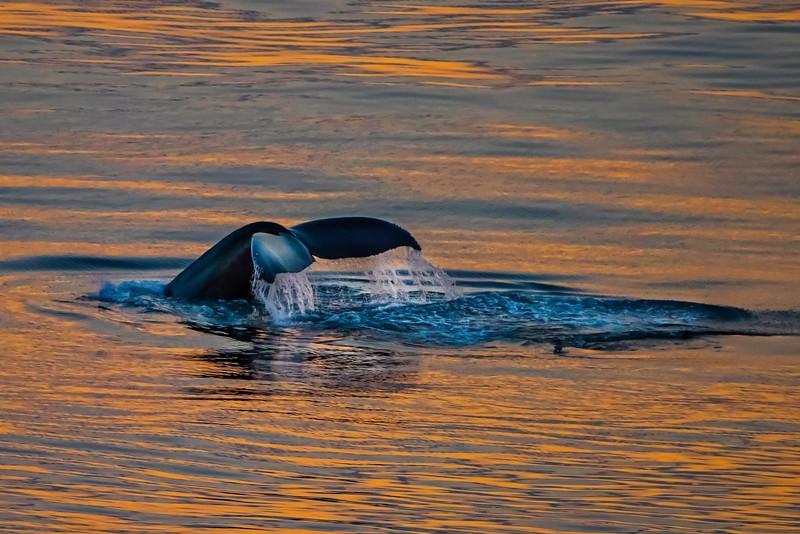 Alaska-Canada Sunset- Lum 2396.jpeg