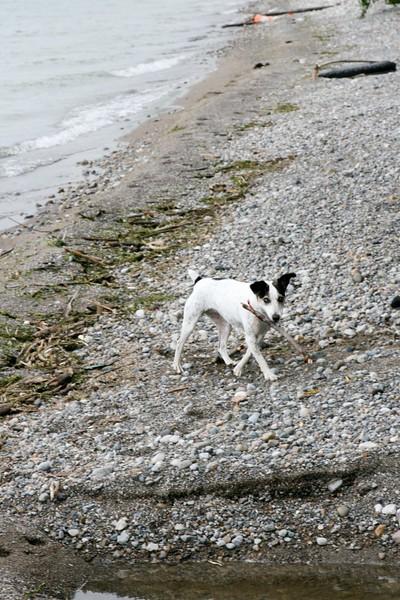 farley pups 027-2 (1).jpg