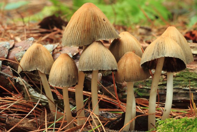 Mushrooms- Crex Visitor Center