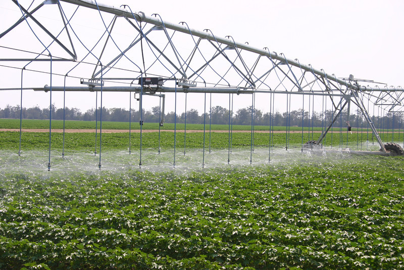 Overhead irrigation system to save water on cotton