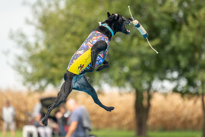 09-08-2018 Illinois Southtown K9 NADD AKC Dock Diving Tournament of Champions