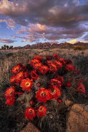Wayne Suggs Photo Gallery