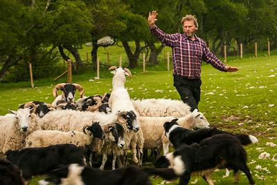 Kincraig - Leault Farm - Scotland
