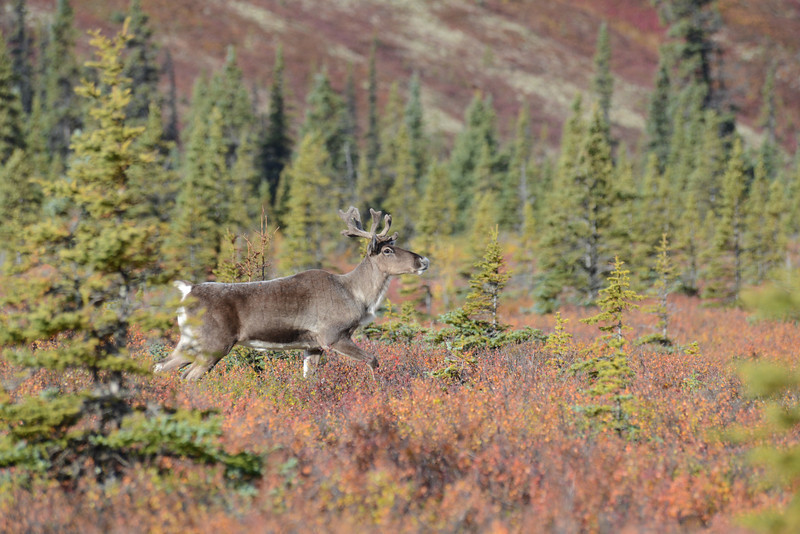 Alaska Fall 2013 - 181.jpg