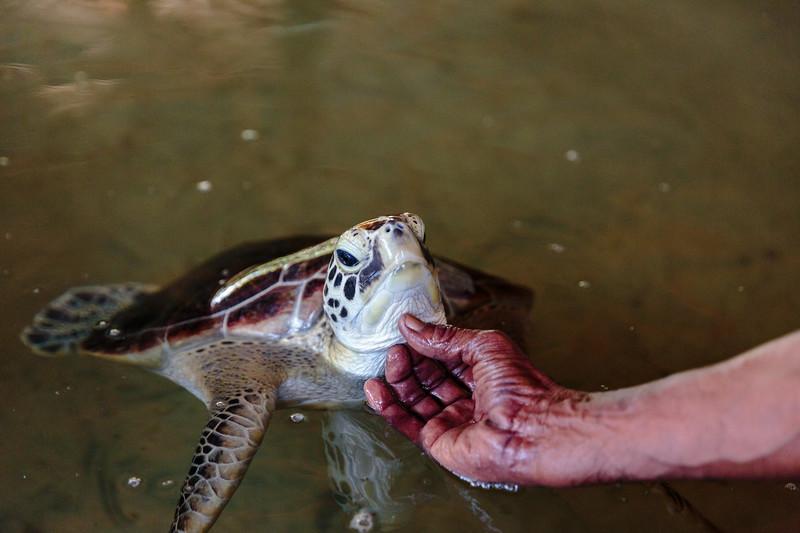 Turtle Stroke