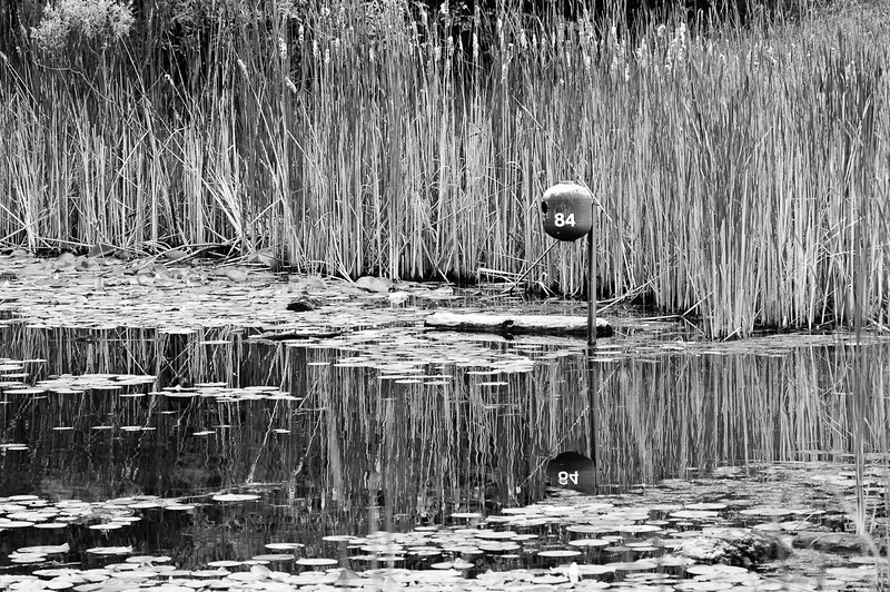 20100613_beyers_pond_040bw.jpg
