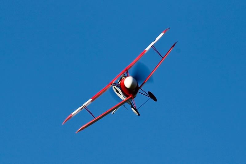 FZ_AlbatrosDV_30.jpg