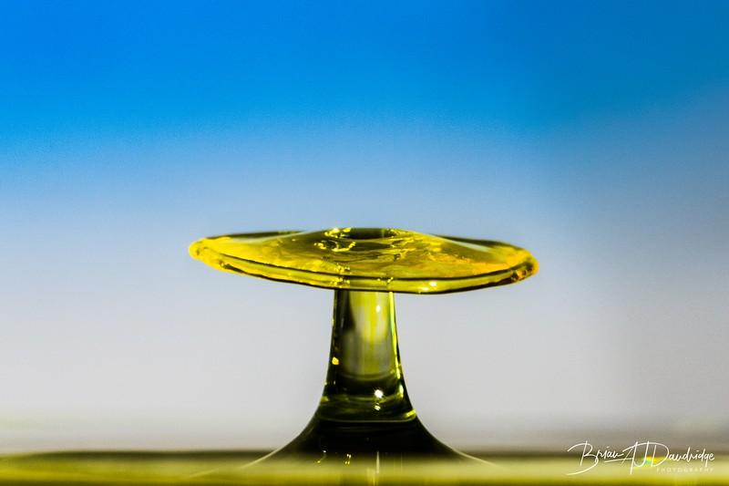 Splash_Art_yellow-1374.jpg