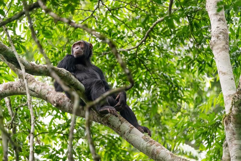 Uganda_T_Chimps-1130.jpg