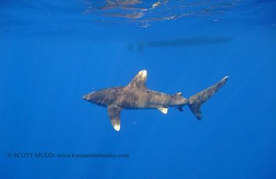 sharks (さめ )