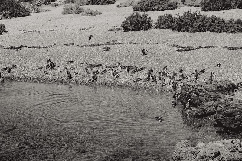Beach Chilling Penguins