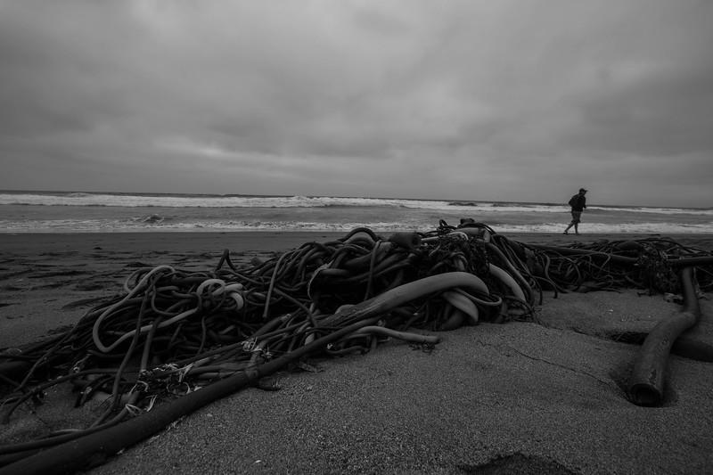 Seaweed at Bodega