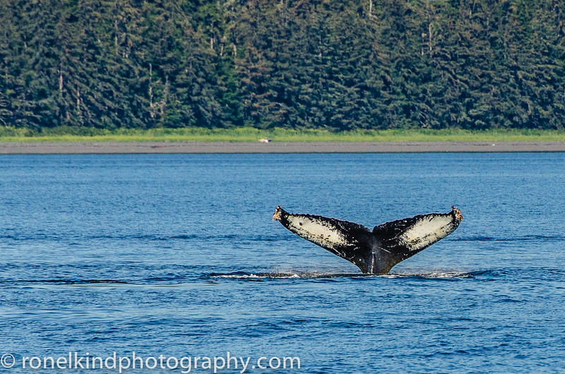 Whale's tail.