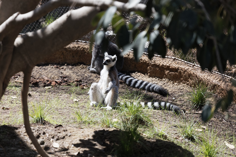 San Diego Zoo, September 22-23, 2017