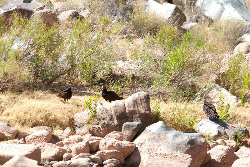 2014_Grand_Canyon_WHDW2_7D 89