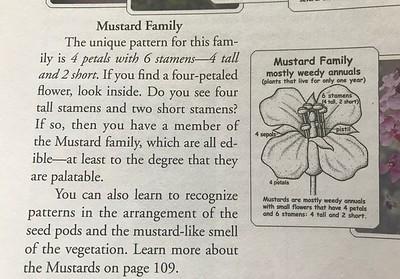 3. MUSTARD FAMILY