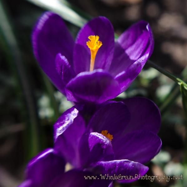 20120401_SpringBlooms_0034.jpg