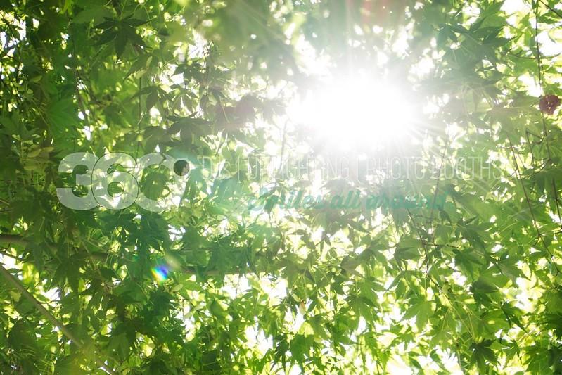 Heavenly-Canopy_batch_batch.jpg