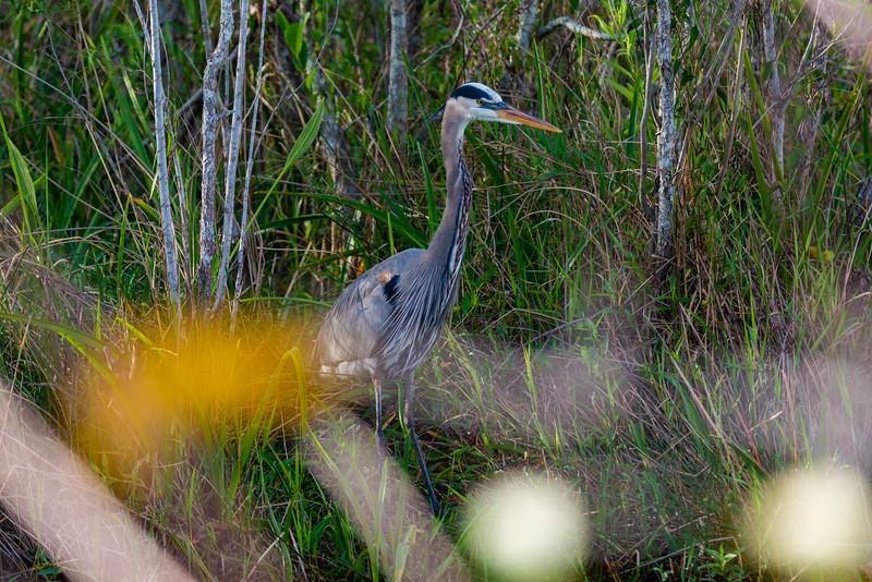 Everglades (33 of 37).jpg