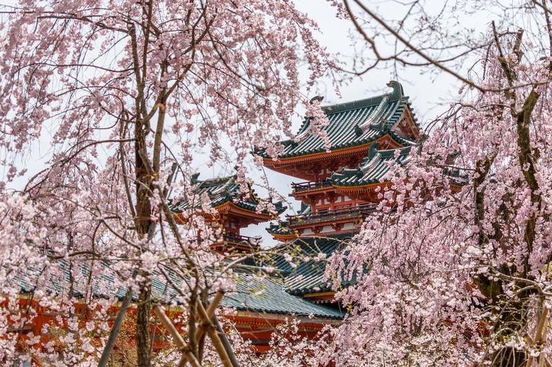 Blossoms over Heian Jingu || Kyoto