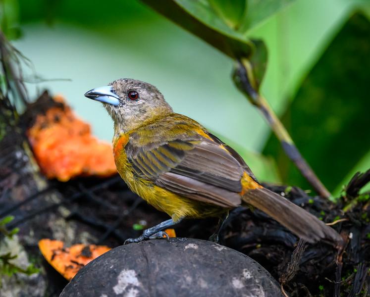 2018-07-21_12h07m17s_850_8471_Costa Rica.jpg