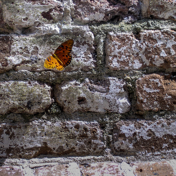 Butterfly at Fort Sumter