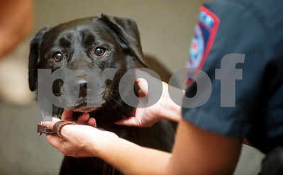 new-tyler-isd-canine-officer-will-sniff-out-drugs