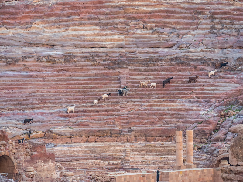 Goats on the Bleachers, Petra, Jordan
