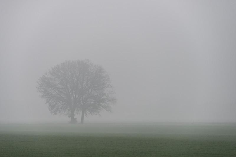 Fog - Nonantola, Modena, Italy - December 15, 2015