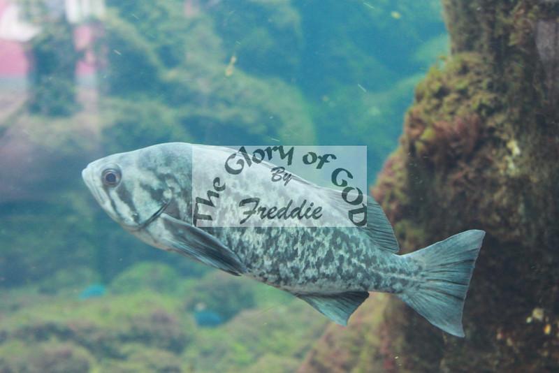 Aquarium 20045.jpg