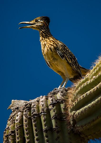 Arizona_050617_0419.jpg
