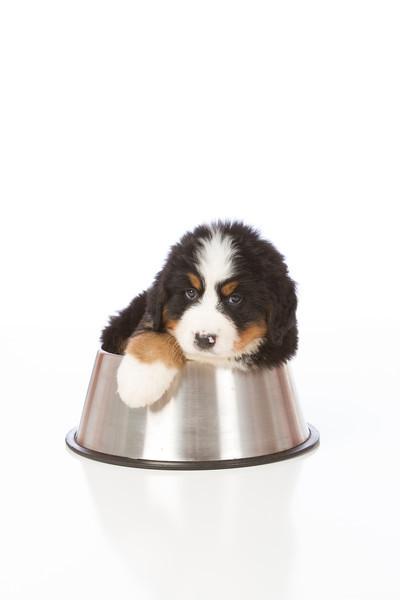 2013-Pearson Pups-Jun02-0377.jpg