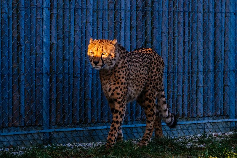 Tonis Zoo-0285.jpg