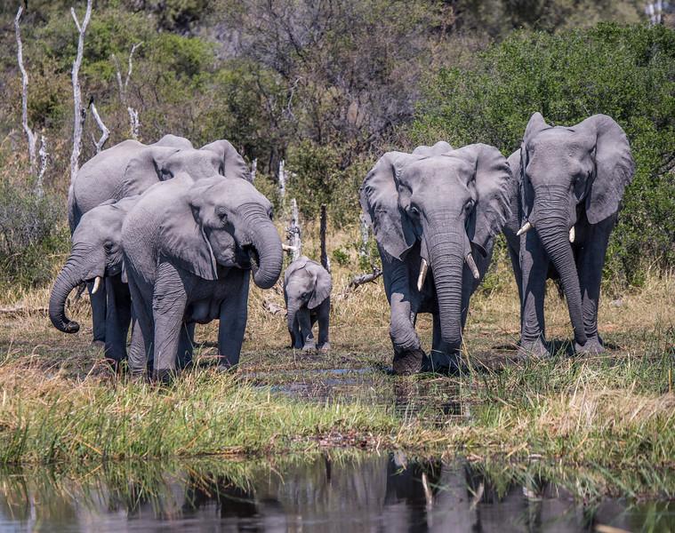 Botswana_June_2017 (3232 of 6179).jpg