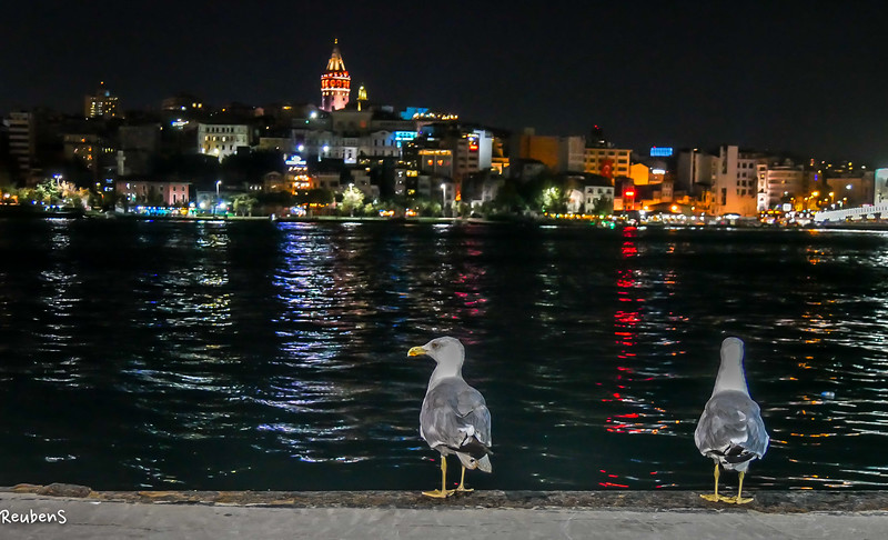 Seagulls galata.jpg