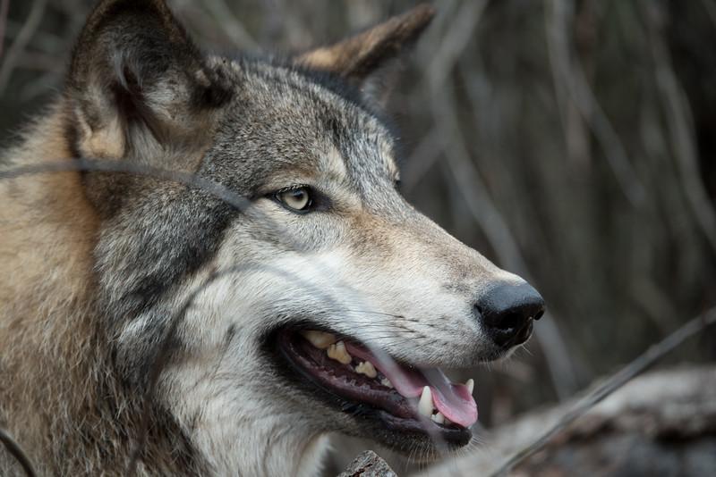 Seacrest Wolves_-53.jpg