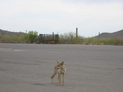 Tucson Trip 2006 May