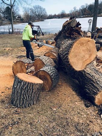 2019 Tree Cutting