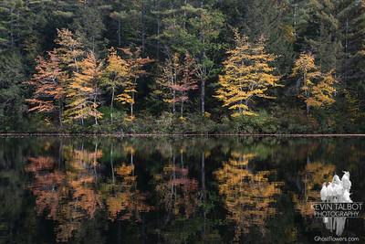 Hoyt Audubon Sanctuary & Hatch Pond 10-11-21