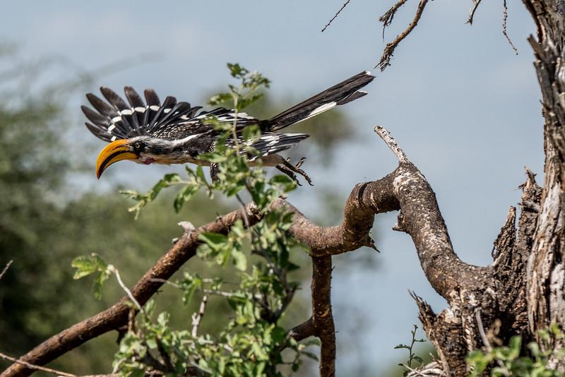 Samburu (38 of 70).jpg