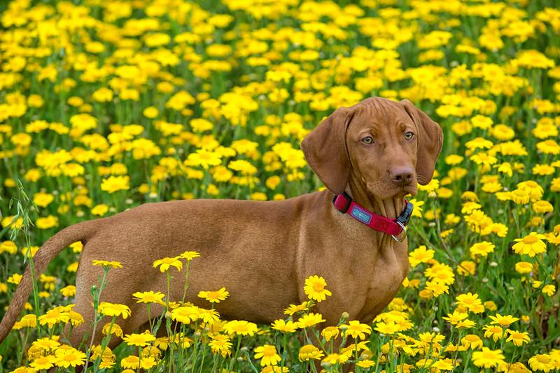 Dogs_Bosca_Cornwall_2014_FH0T7762.jpg