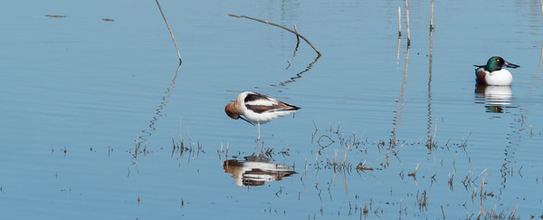 Day 6 Birds in Merced National Wildlife Refuge