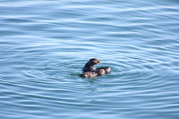 2012 0115 Monterey