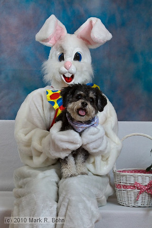 Easter Bunny & Pet photos at WAH