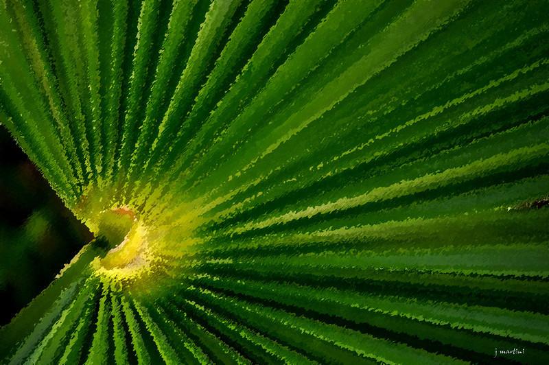 rays 2-5-2011.jpg