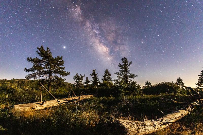 The Milky Way Over Moonlit Pine Trees in Mount Laguna.
