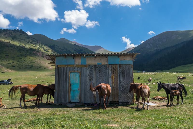 Producing kumis, the fermented mare's milk popular across the region