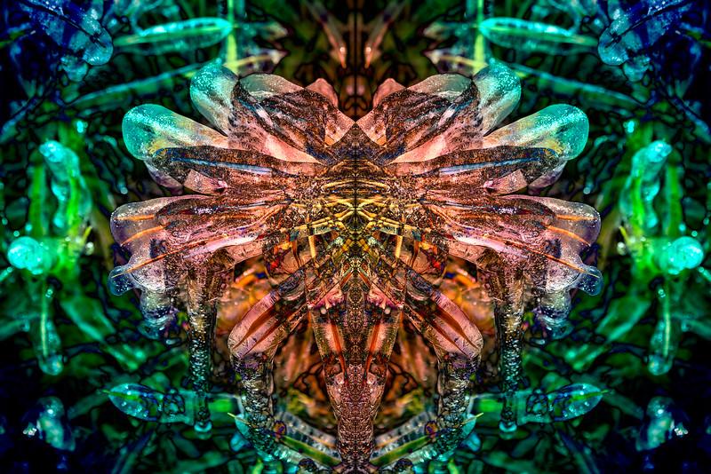 20201014-_DSC4954-Mirror-2-3.jpg